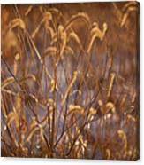Prairie Grass Blades Canvas Print