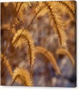 Prairie Grass Detail Canvas Print