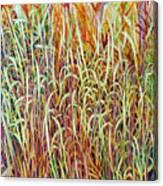 Prairie Grasses Canvas Print