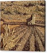 Prairie Harvest Canvas Print