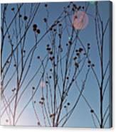 Prairie Plants Canvas Print