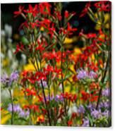 Prairie Wildflowers 2 Canvas Print