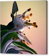 Praise For The Morning... Canvas Print