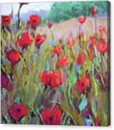 Praising Poppies Canvas Print