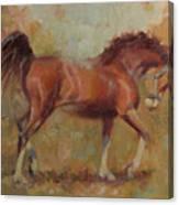 Prancing Bay Canvas Print