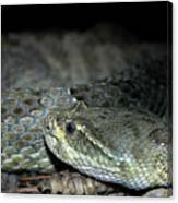 Prarie Rattle Snake Canvas Print