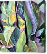 Pray Plant Canvas Print