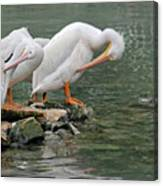 Prayer Of The Pelicans Canvas Print