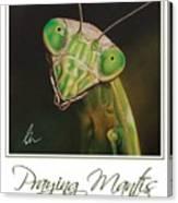 Praying Mantis Poster Canvas Print