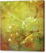 Pre Show Delicacy 8883 Idp_2 Canvas Print