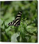 Precious Black And White Zebra Butterfly In The Spring Canvas Print