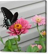 Precious Pinks Canvas Print