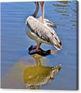 Preening Pelican Canvas Print