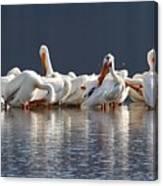 Preening Pelicans Canvas Print
