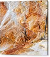 Prehistoric Trees Canvas Print