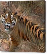 Pretoria Zoo Canvas Print