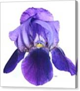 Prettiest Purple Iris Canvas Print