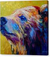 Pretty Boy - Grizzly Bear Canvas Print