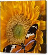 Pretty Butterfly On Sunflowers Canvas Print