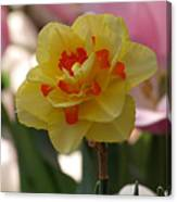 Pretty Daffodil Canvas Print