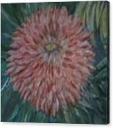 Pretty Dahlia Canvas Print