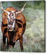 Pretty Female Cow With Horns Canvas Print