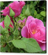Pretty In Pink 3 Canvas Print