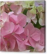 Pretty In Pink Hydrangeas Canvas Print