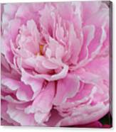 Pretty In Pink Peony Canvas Print