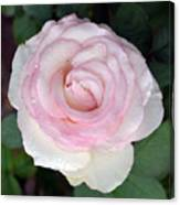 Pretty In Pink Rose Canvas Print