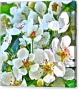 Pretty In White Canvas Print