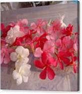 Pretty Little Flowers Canvas Print