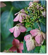 Pretty Old Flowers Canvas Print
