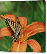 Pretty Orange Lily With A Butterfly On It's Petals Canvas Print