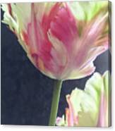 Pretty Parrot Tulip 2 Canvas Print