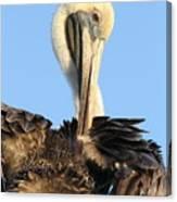 Pretty Pelican Canvas Print