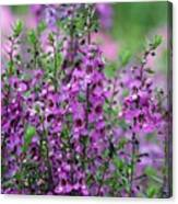 Pretty Pink And Purple Flowers Canvas Print