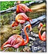 Pretty Pink Flamingos Canvas Print