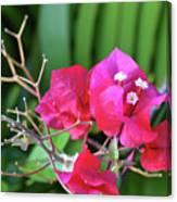 Pretty Pink Flowers 2 Canvas Print
