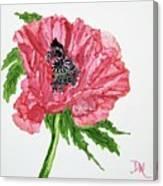Pretty Poppy Canvas Print