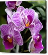 Pretty Purple And White Canvas Print