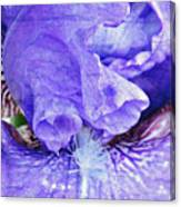 Pretty Purple Canvas Print