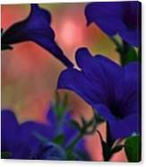 Pretty Petunias Canvas Print