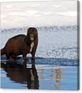 Pretty Reflecting Mink Canvas Print