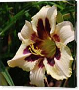 Pretty Single Blooming Daylily In A Garden Canvas Print