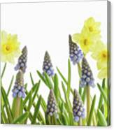 Pretty Spring Flowers All In A Row Canvas Print