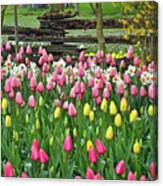 Pretty Tulips Garden Canvas Print
