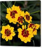 Pretty Yellow Flowers Canvas Print