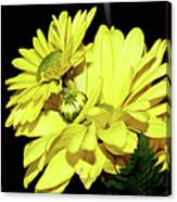 Pretty Yellow Flowers Canvas Print