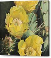 Prickle Pear Cactus Flower Trio Canvas Print